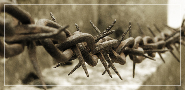Life is a thorny chain...