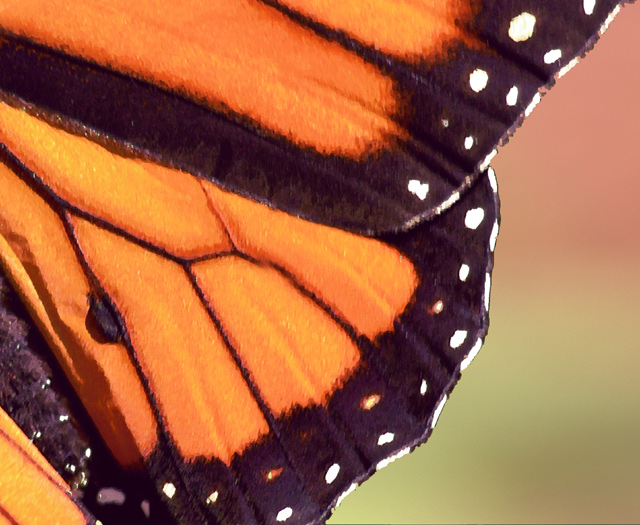 Anatomy of a Butterfly Wing by wmstark - DPChallenge