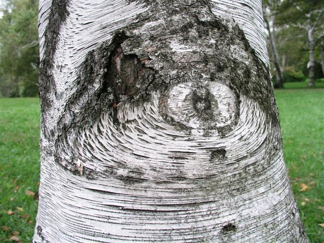 Tree with an Eye