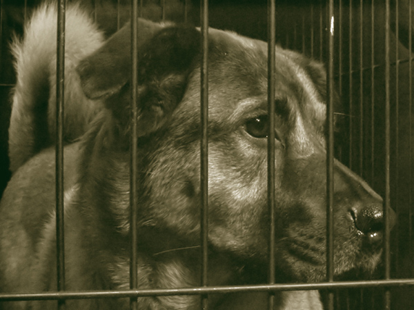 One of Millions Sentenced to Die Yearly. Spay or Neuter Your Pet.