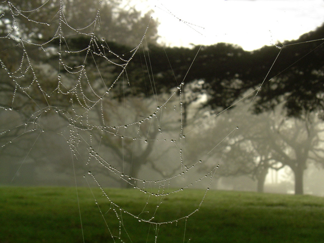 spiderweb early morning