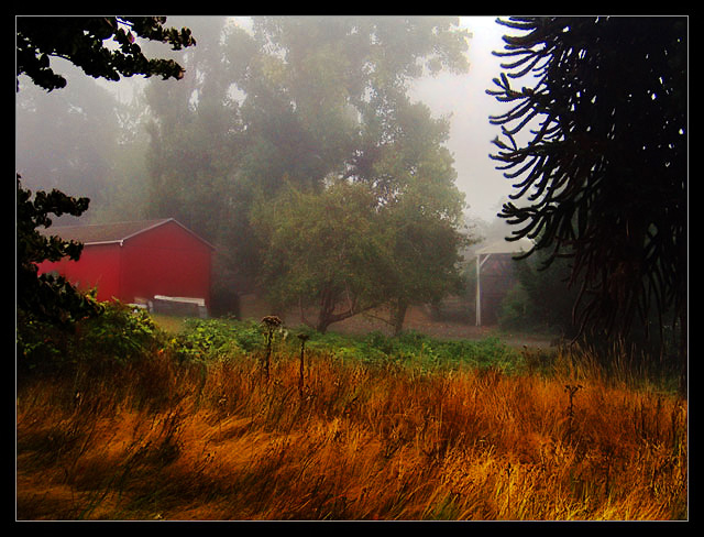 The Mists of Coquille
