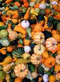 PUMPKINS, SQUASH AND GOURDS