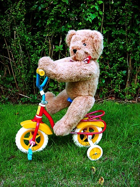 bearcycle