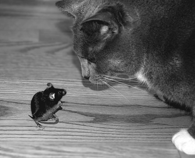 Tom & Jerry (a real mouse)