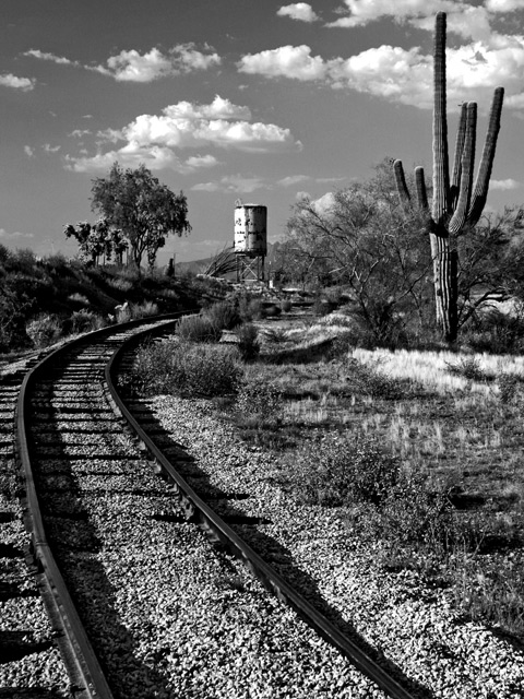 Tracks into the Desert