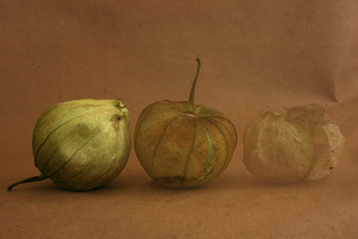 Progression of the Tomatillo