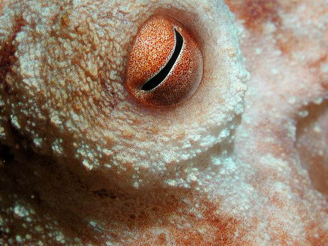 Eye of the Octopus