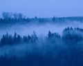 Blue Fog in the Foothills