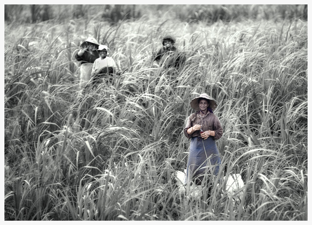 The Sugar Cane Workers