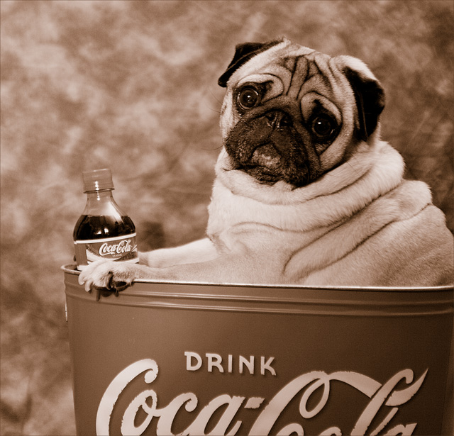 Have A Coke and a Pug !!