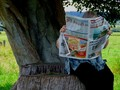 NEWSPAPER AFTERLIFE OF TREE.