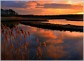 Flood Tide & Cattails � Sunset