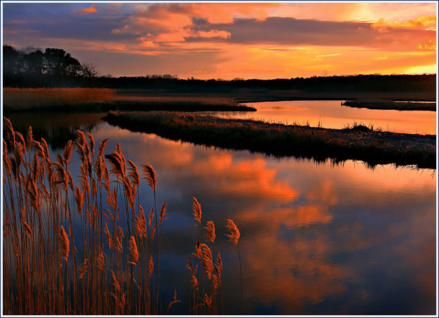 Flood Tide & Cattails — Sunset