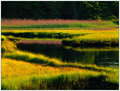 Salt Marsh at Midsummer � June, 2002