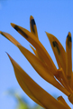 Helaconia on Sky