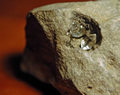 A Diamond in the Rough - Herkimer Diamonds