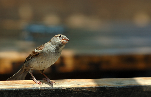 Bird, .. waiting for eat !