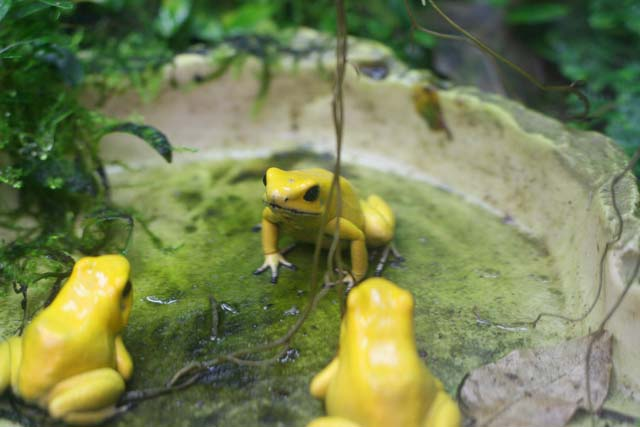 Assembly of the Poison Dart Frogs