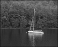 Sailboat On Fairfield Lake