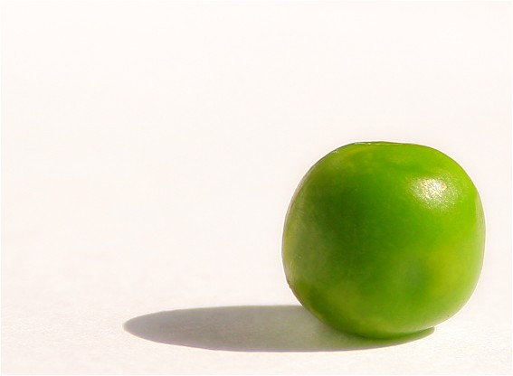 The Lonely Pea