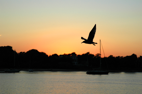sunset w/ the gull