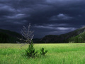 A dark cloud eyeing a dry tree
