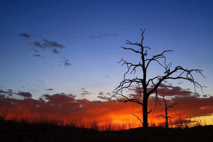 Burnt Tree at Sunset