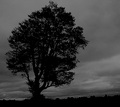 Hayfield tree