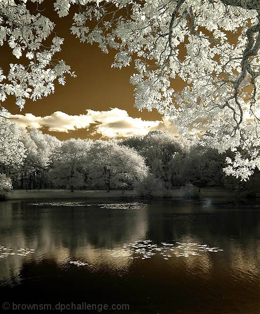 Saw Mill Pond in Infrared