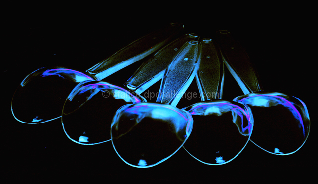 """Plastic Silverware""  in ""Black Light"""