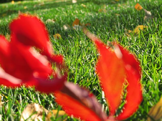 Red leaves, green grass