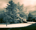 blowing trees in infrared