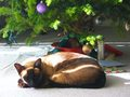 Christmas Napping
