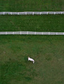 Horse from Above