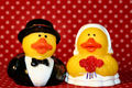 Introducing Mr. and Mrs. Donald Duckworth!
