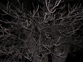 Branches in the night