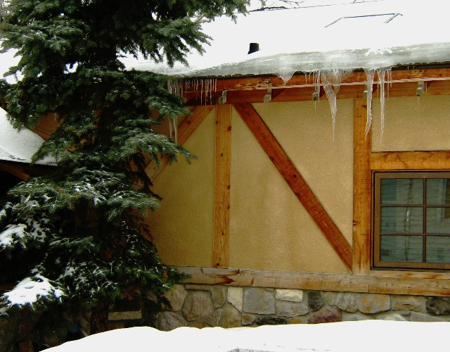 Icicles and Evergreen