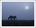 The Horse of Fog