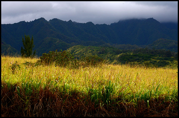 The Fields of Wailua