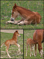 A Day In The Life Of A Foal - Sleep, Eat and Play