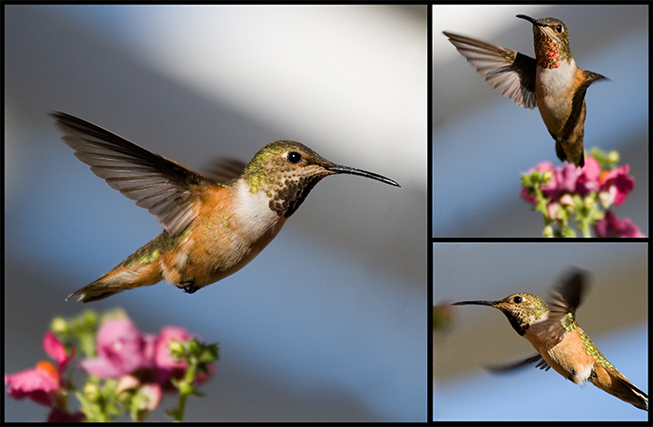 Flight of the Hummingbird..