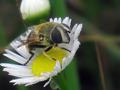 "Entomology for Beginners ""BEE"""