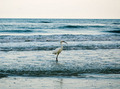 the Egret in the Sea