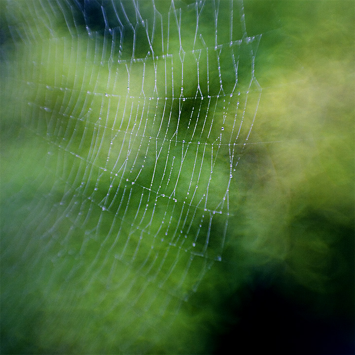 Webs of Significance