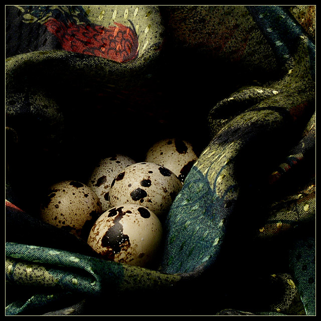 Still life with quail eggs