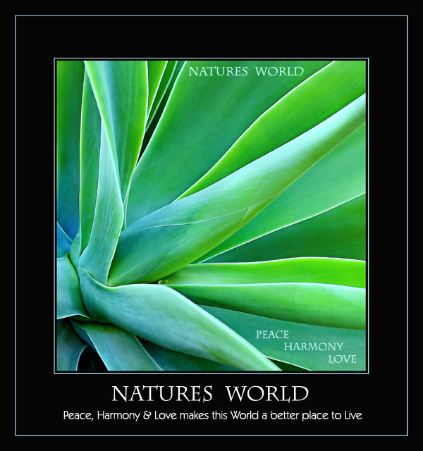 Natures World - Peace, Harmony & Love, makes this World a better place to Live