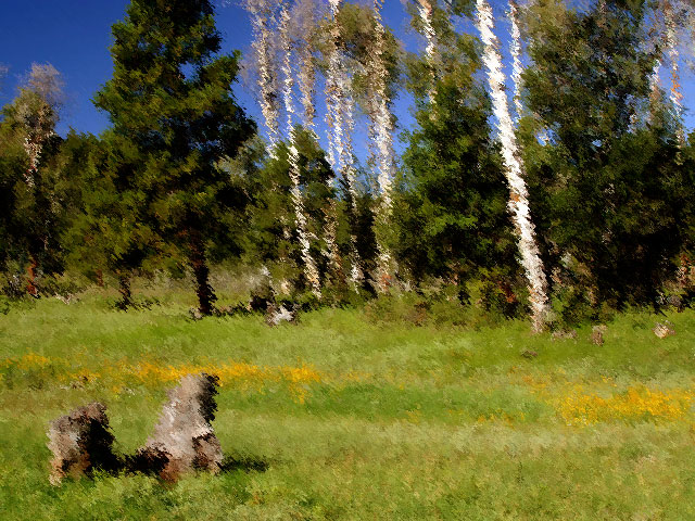 Aspen Grove with Flowers