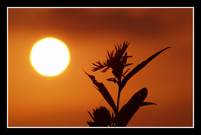 sunset with flower