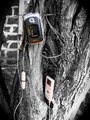 Technology in a Tree